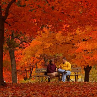 Fall foliage couple on bench