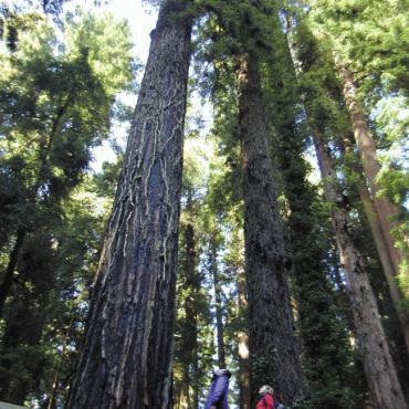 CA sequoia park
