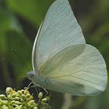 FL Key West botanical gardens butterfly1