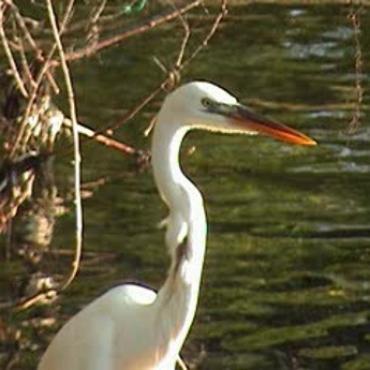 Florida Keys wild bird centre