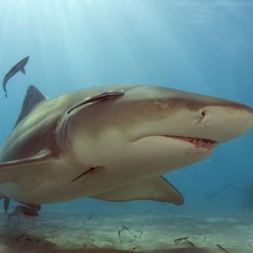 Florida keys  Aqua ranch shark