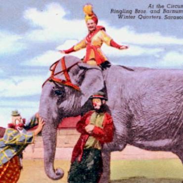 Sarasota Ringling elephant