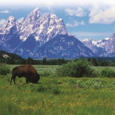 Wyoming buffalo scenic
