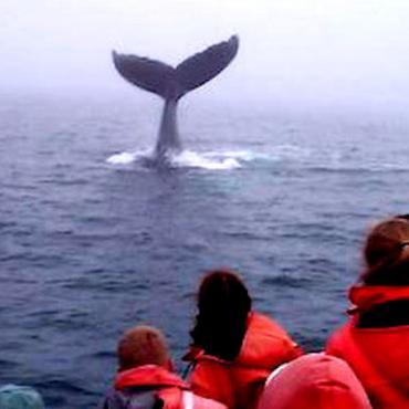 NS Whale watching.jpg