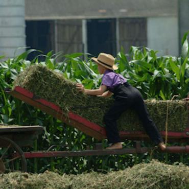 PA Amish boy_bailing_hay_300dpi[1].jpg