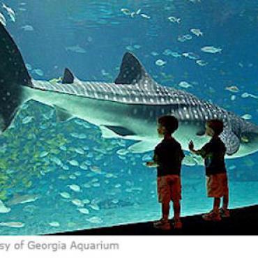 Georgia Aquarium.jpg