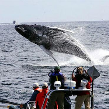 MA 7seas whale watch tour.jpg