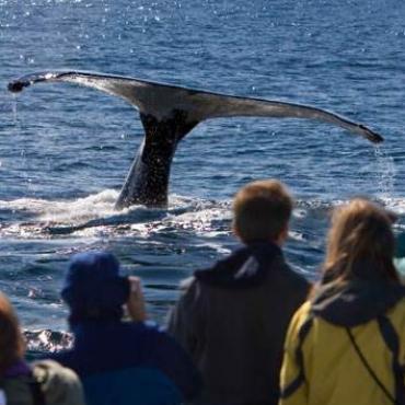MA Whale watching.jpg