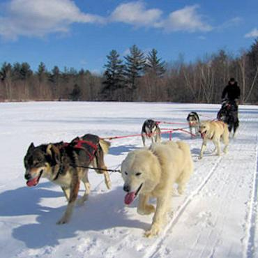 NE DOgsledding 3.jpg