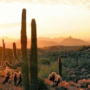 PHX desert.jpg