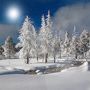 Yellowstone winter trees.jpg