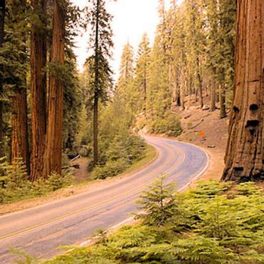 CA Sequoia Ntl Park.jpg