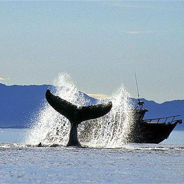 Canada whale watching.jpg