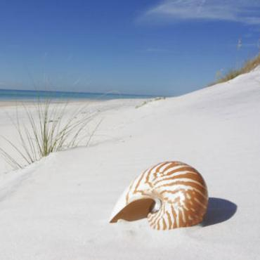 FL Beach_Shell[1].jpg