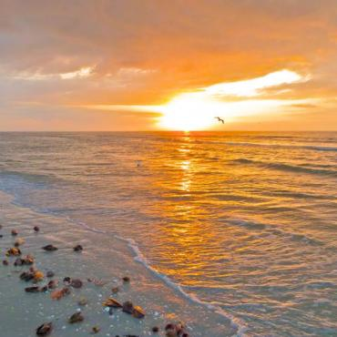 Sanibel sunset shells.jpg