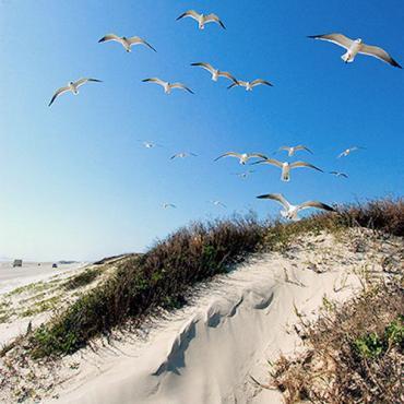TX Beach .jpg