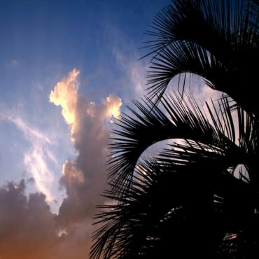 Florida Palm and Sunset