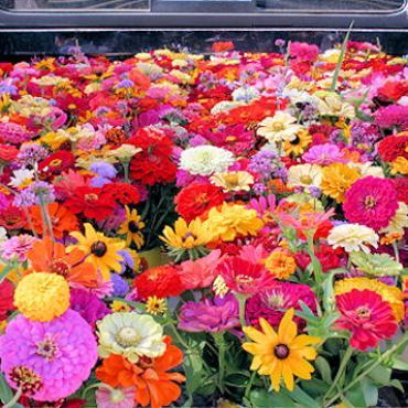 MA Farmers market.jpg