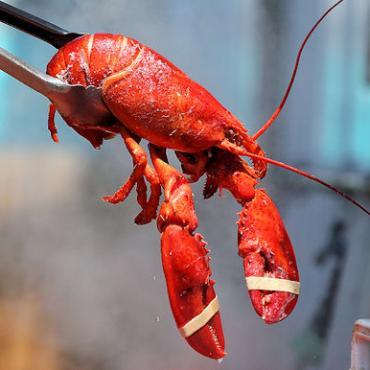 New Eng Lobster.jpg