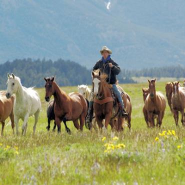MT  Herding horses.JPG