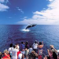 HI whale watching letterbox.jpg