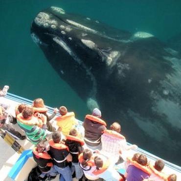 HI whalewatching letterbox2.jpg